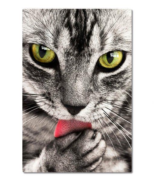 Kissa_lahikuva_pysty